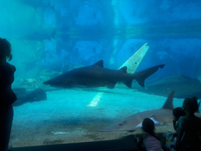 Diining with the Sharks at Ushaka Marine world